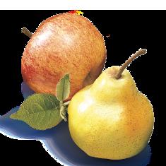 Apfel_Birne